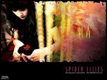 Wallpaper/fond d'écran Spider Lilies / Ci qing (Films)